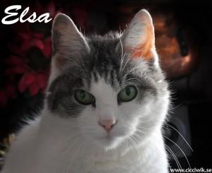 Elsa the cat