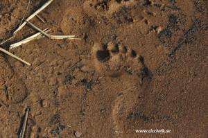 Fotspår i sanden...