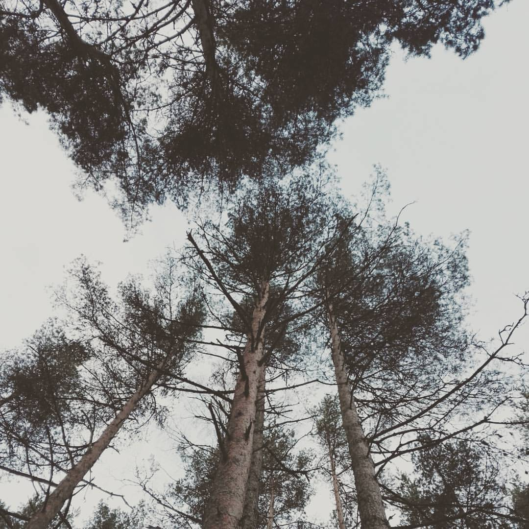 Träden lever i nuet